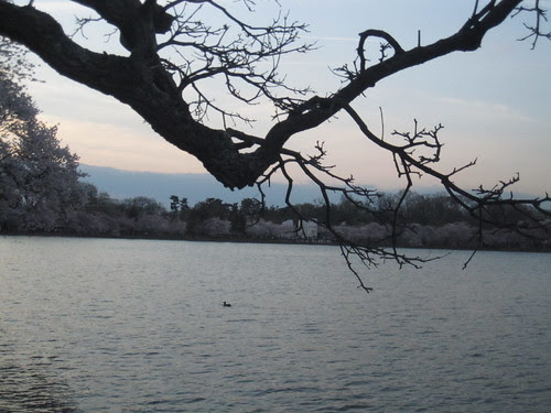Dead tree, Duck