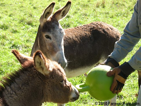 Donkey Ball 8