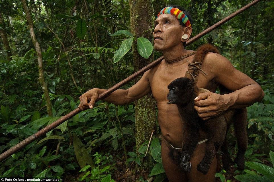 Equador é o lar de 300 espécies de macacos, nenhum dos quais estão em perigo.  Os macacos comem a vegetação da floresta