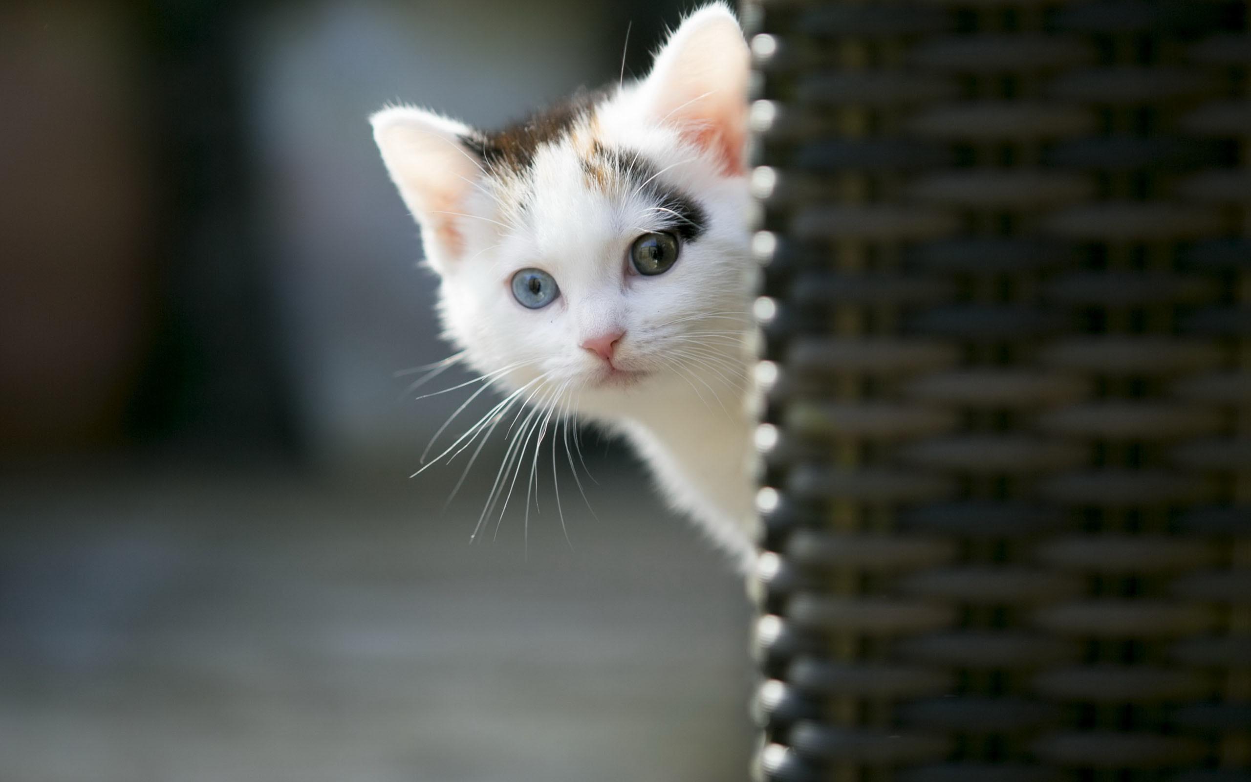Cool Cat HD Wallpaper (66+ images)