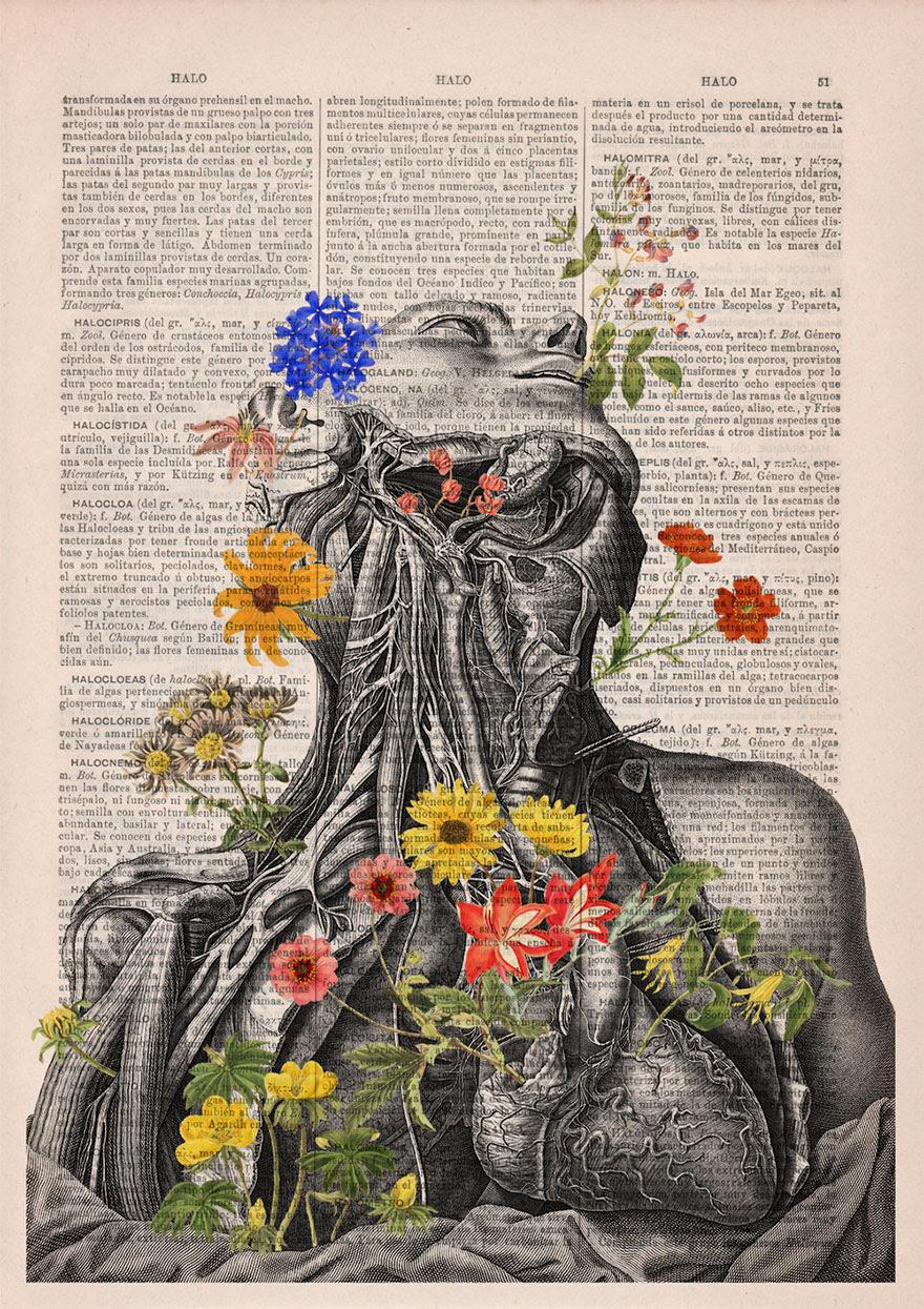 ilustraciones-anatomicas-flores-libros-viejos-prrint (8)