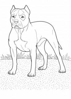 Köpek Boyama Resimleri Resimleri Ve Fotoğrafları