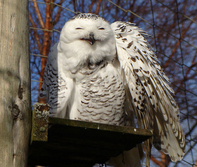 Funny Owls That Are Laughing