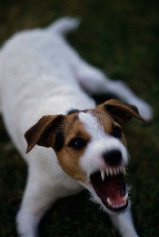What Do Dog Breeds Say About Owners