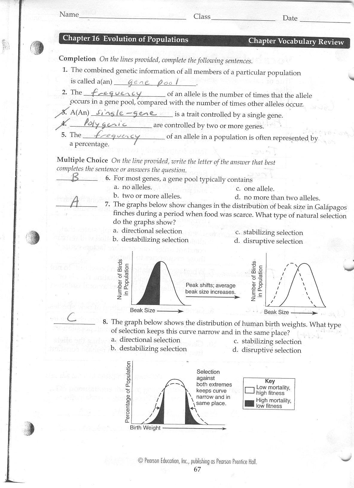 Evolution And Selection Pogil Worksheet Answers