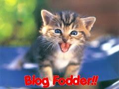 bf kittens_08