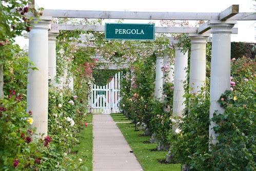 Pergola Garden at David Austin Roses