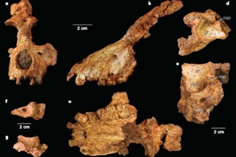 Restos del nuevo primate hallado en Arabia Saudí. | Nature