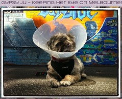 Gypsy Ju ~ Keeping her Eye on Melbourne