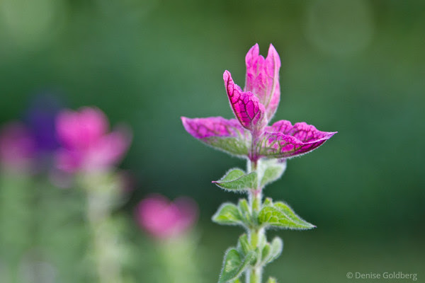 tiny flower in pink