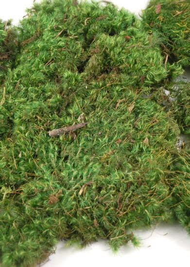 "Mood Moss 4 lbs 1"" thick Natural"