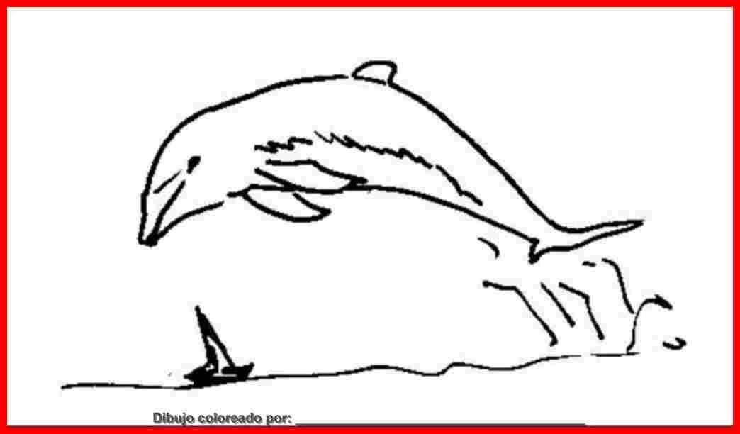 Dibujo De Delfines Para Colorear E Imprimir