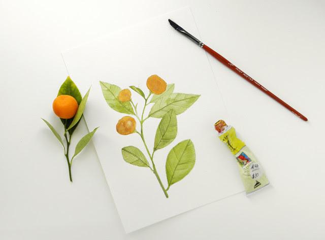 Painting Cumquats