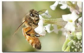 Μέλισσες Γεννημένες για να σκοτώνουν (ΒΙΝΤΕΟ)