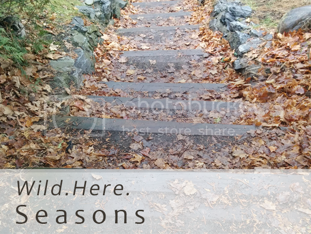 photo wild here seasons_zpskan63efm.png