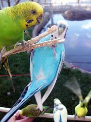 Birds_9510r