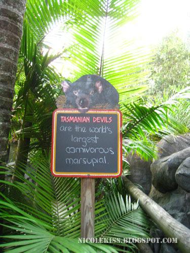 tasmanian devil notice