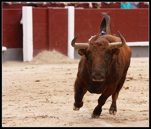 Toro de José Luis Marca