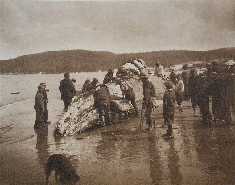 File:The King of the Seas in the Hands of the Makahs - 1910.jpg