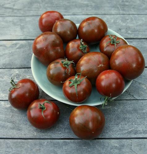 spike tomato