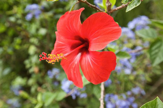 Foto via Flickr.com/photos/generaly/
