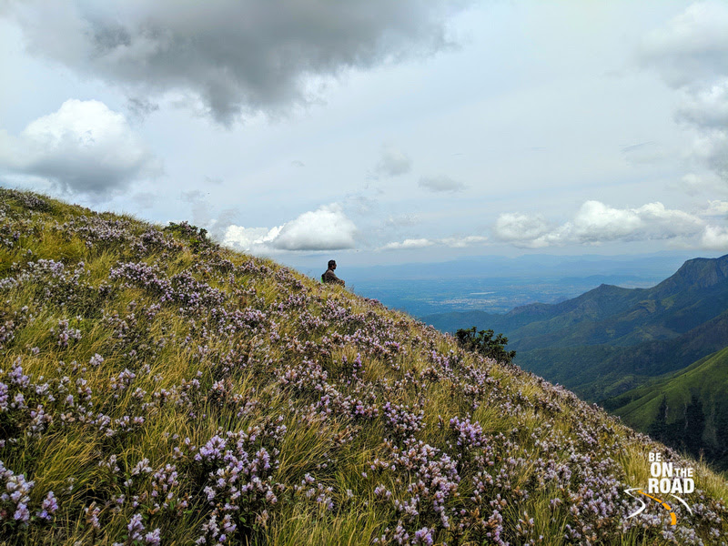 The Neelakurinji special moment