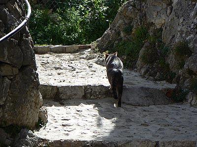 promenade de chat.jpg
