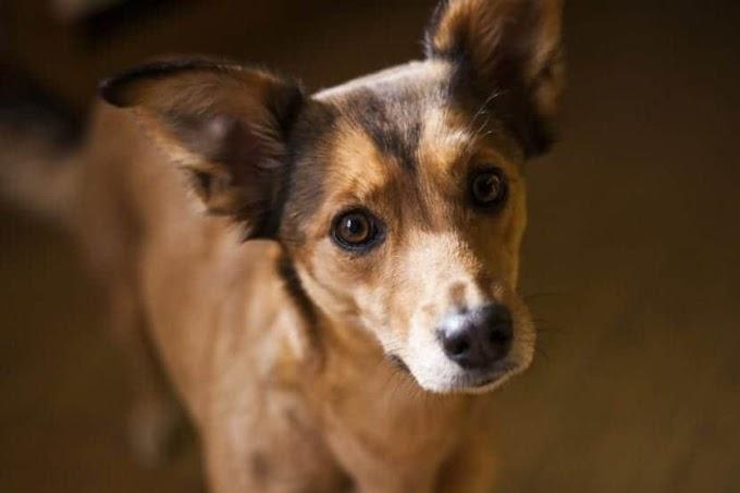Consejos para la adopción de perros pequeños