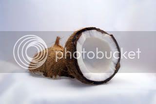 gambar kelapa tua