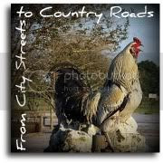 From City Streets to Country Roads