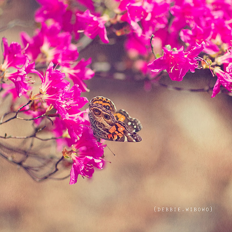 .Just like the butterfly, I too will awaken in my own time. ~Deborah Chaskin~