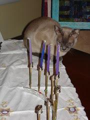 Hanu-cat