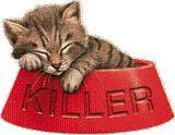chat-avaler-pilule-15 conseils