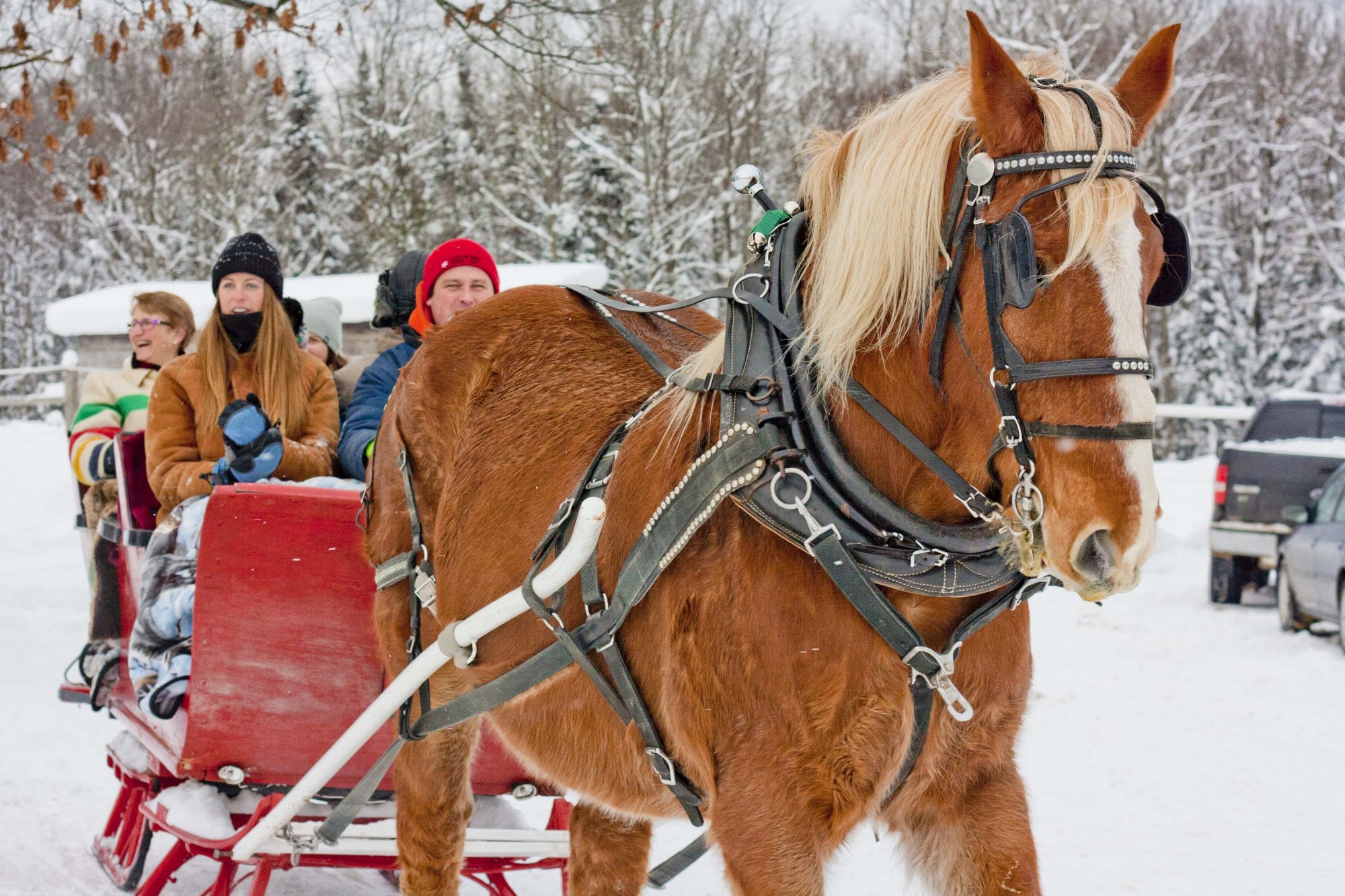 One Horse Open Sleigh Back Of Beyond Equine Centre