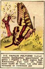 papillon 315