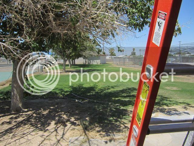Ladder photo SonoranAug2013146a_zpsc47a0111.jpg
