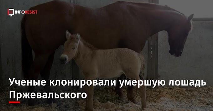 Ученые клонировали умершую лошадь Пржевальского