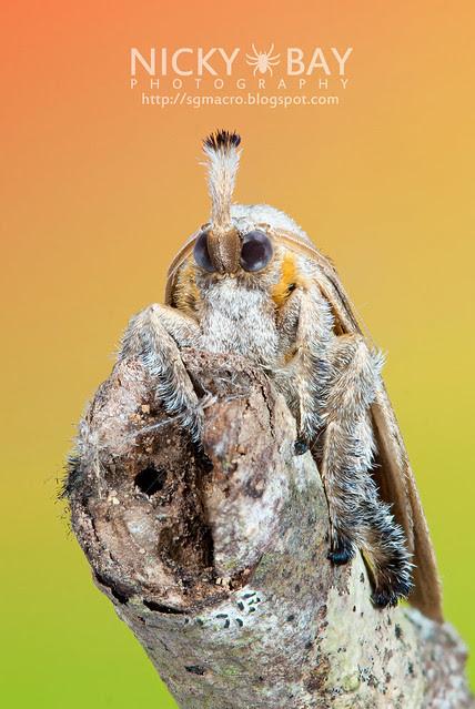 Moth - DSC_6624