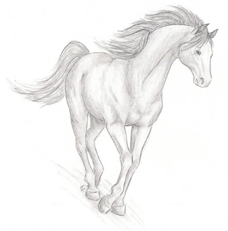 Realistic Horse Sketch by WildSpiritWolf on DeviantArt