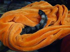 Maggie burrowed in her blanket