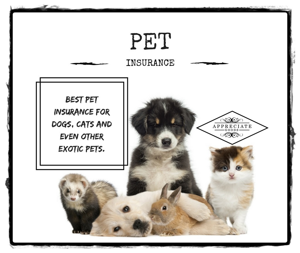 Best Pet Insurance for Dogs, Cats And Other Exotic Pets