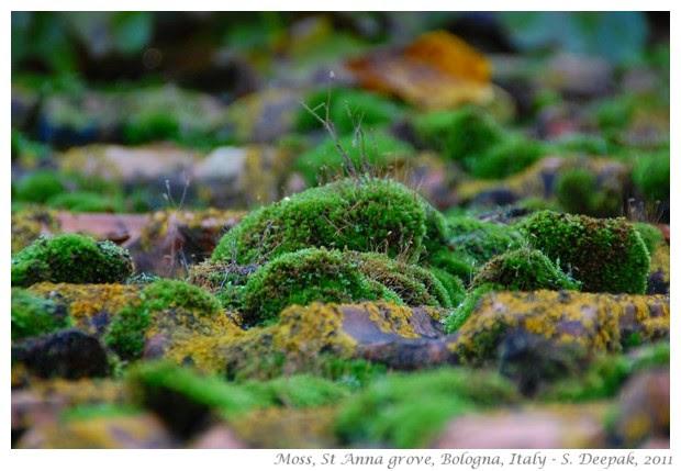 Marco Colombari and nature walk, st anna grove - S. Deepak, 2011