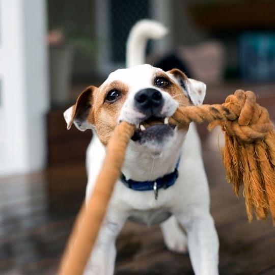 Cómo cuidar un perro