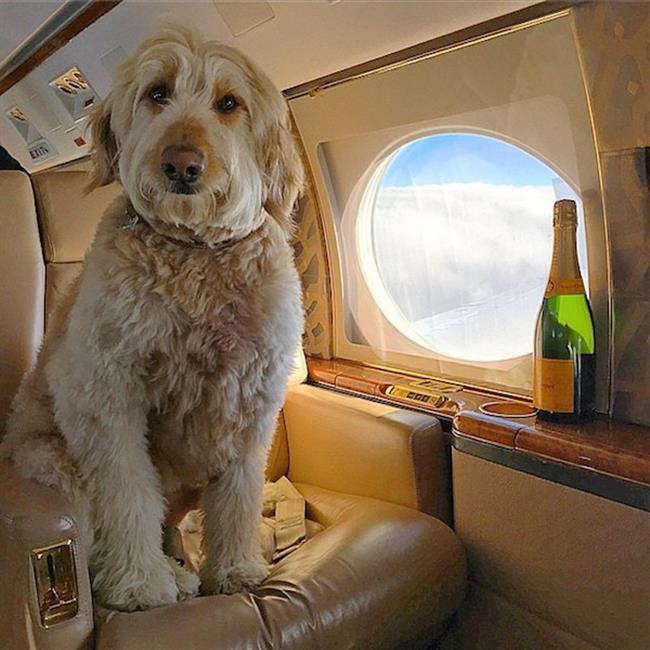 cachorros-ricos-9