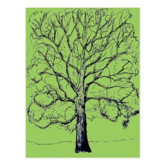 Stately Sketched Tree Postcard