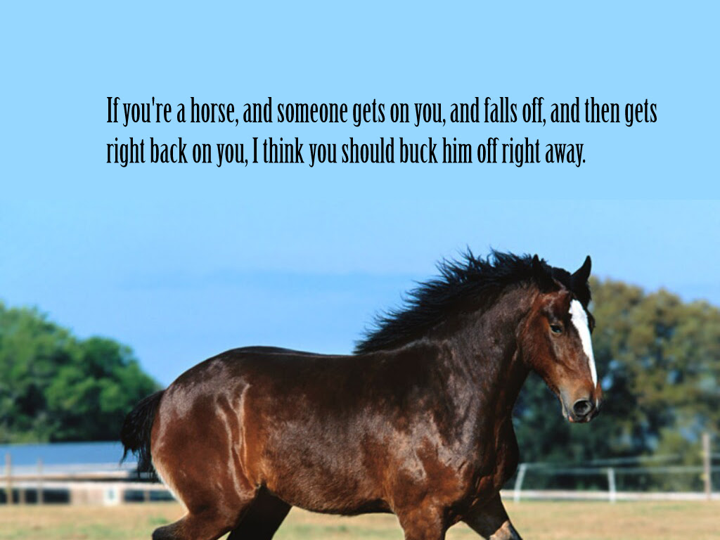 If Youre A Horse And Someone Gets On You And Falls Off And Then