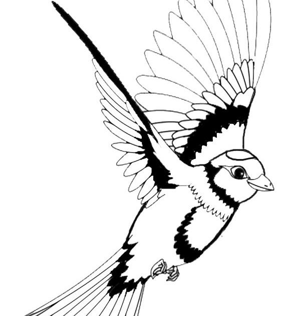 37 vögel zum ausdrucken kostenlos  besten bilder von