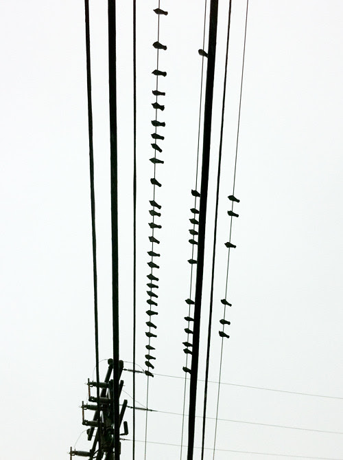 bird silhouettes on power lines, Ketchikan, Alaska