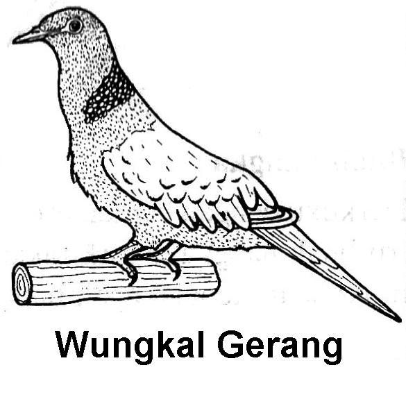 Gambar Elegant Sketsa Burung Merpati Ide Desain Sketch Coloring Page