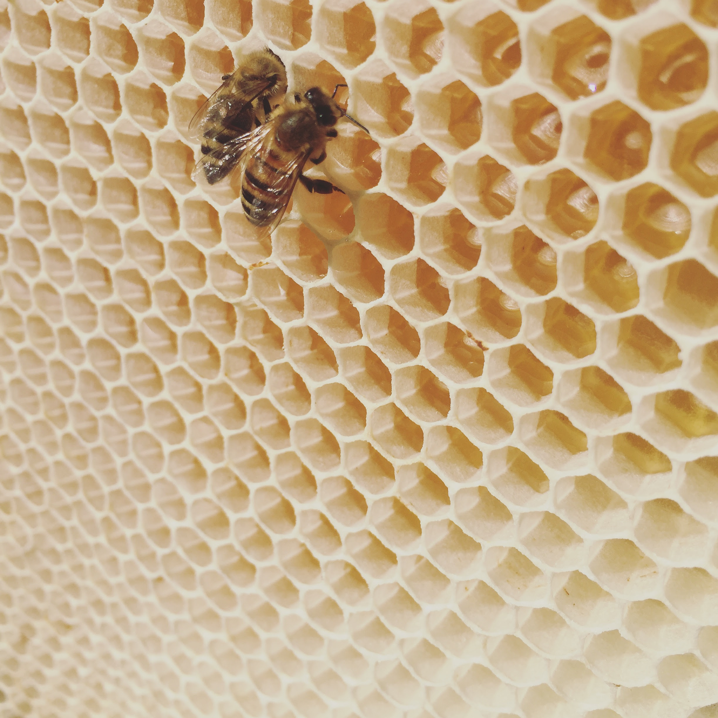 +144 How To Have A Beehive In Your Backyard | Home Decor